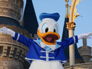 Donald Duck desktop wallpaper
